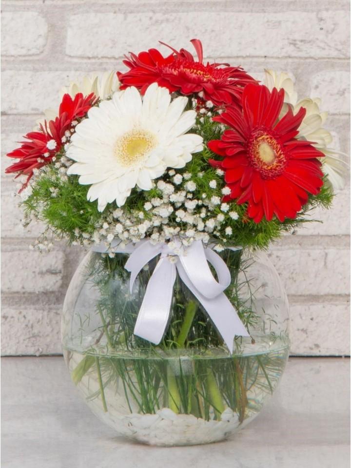 Beyaz ve Kırmızı Gerberanın Aşkı