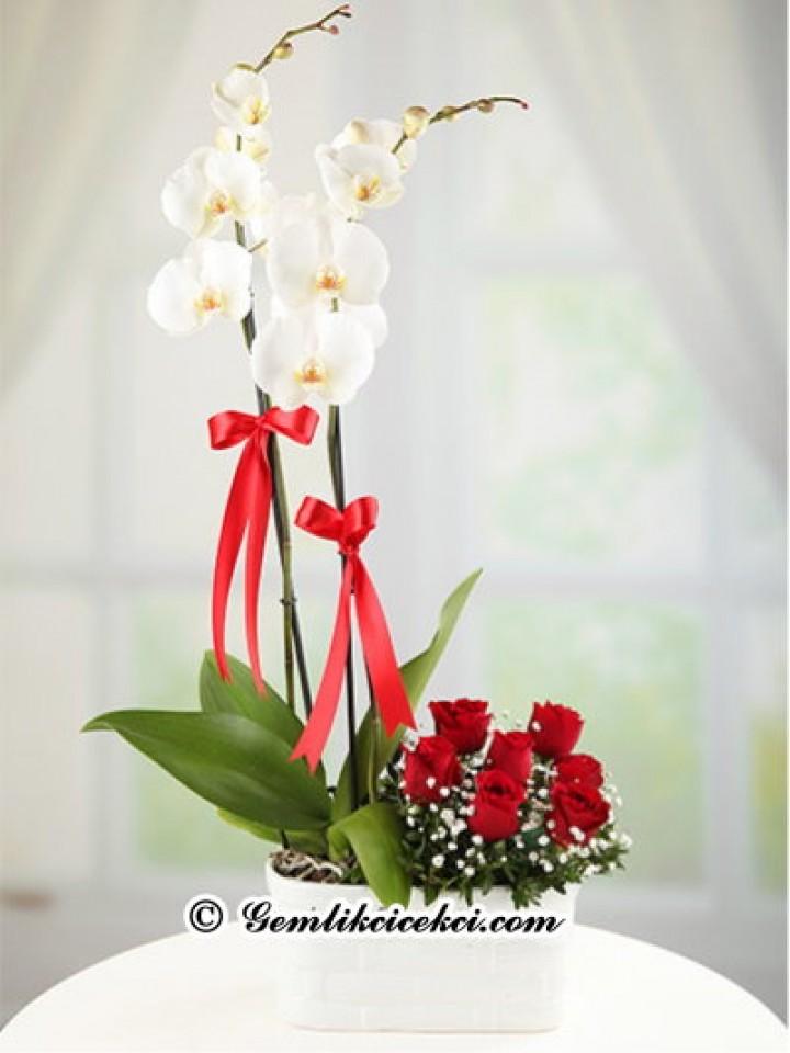 Çift Dallı Beyaz Orkide ve 7 Adet Kırmızı Gül